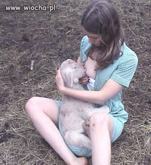 pokorna owieczka